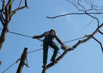 L'Arbre en Soy - Taille d'arbres