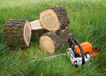L'Arbre en Soy - Abattage d'arbres
